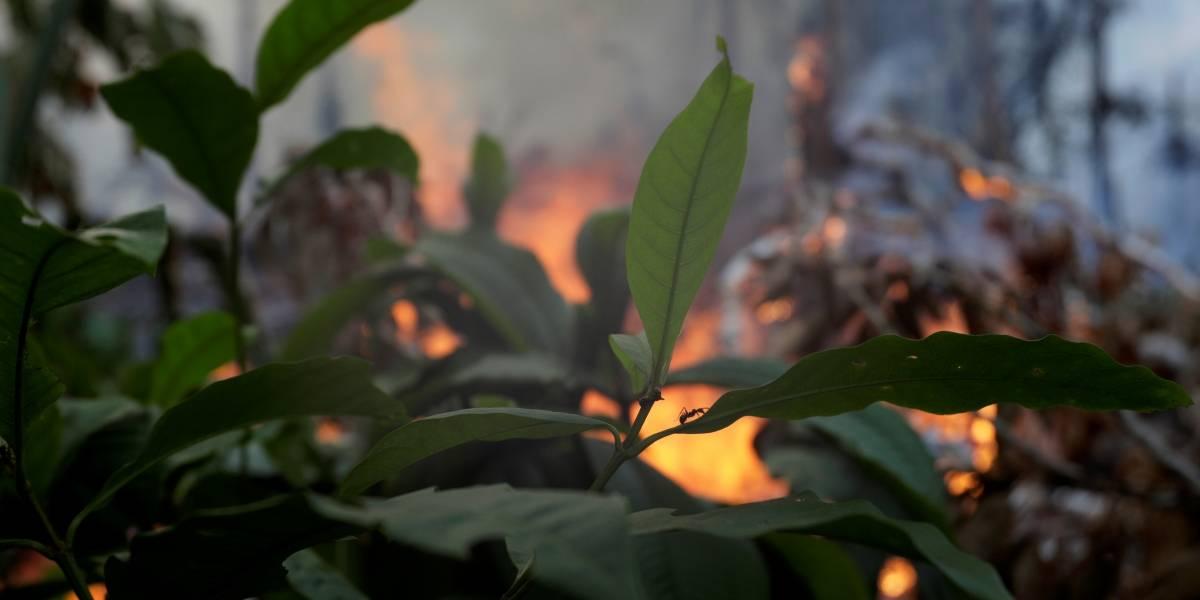 Será 2019 o pior ano de incêndios na Amazônia?